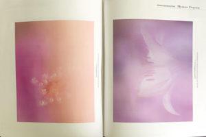 Macro Photographie - Myriam Dupouy