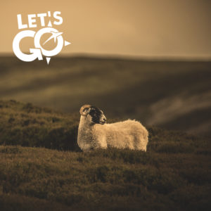 Let's Go Travel - Myriam Dupouy