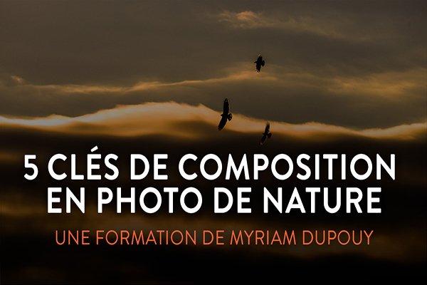 Blog - 5 clés de Composition - Studio Jiminy- Myriam Dupouy